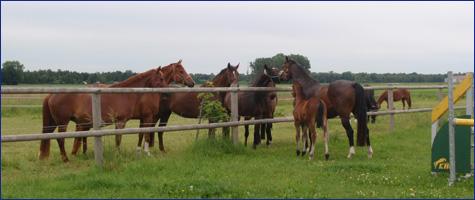 sägemehl einstreu pferde